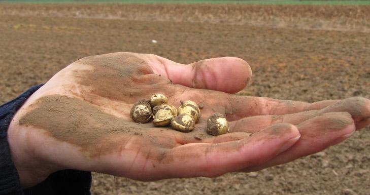 8 estáteras de oro de los senanos encontradas con un Teknetics T2